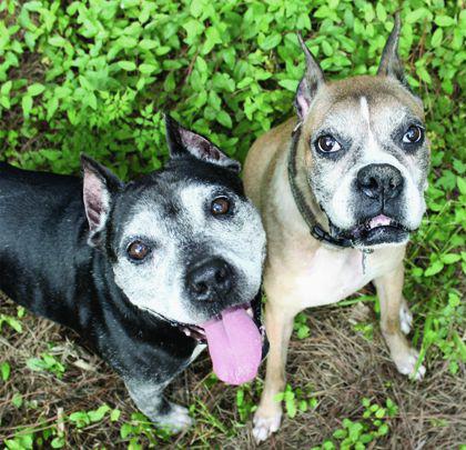 sanctuary senior dogs